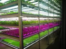 $地域価値創造コンサルタント 須田憲和-植物工場